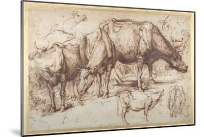 Cattle in Pasture, C.1618-20-Sir Anthony Van Dyck-Mounted Giclee Print