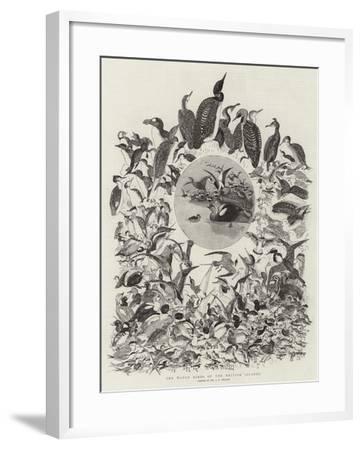 The Water Birds of the British Islands-John Everett Millais-Framed Giclee Print