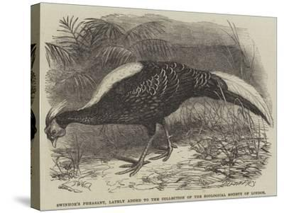 Swinhoe's Pheasant, Lately Added to the Collection of the Zoological Society of London-Thomas W. Wood-Stretched Canvas Print