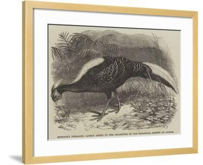 Swinhoe's Pheasant, Lately Added to the Collection of the Zoological Society of London-Thomas W. Wood-Framed Giclee Print