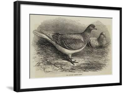 The Antwerp Carrier Pigeon-Thomas W. Wood-Framed Giclee Print