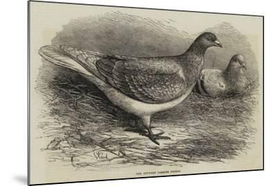The Antwerp Carrier Pigeon-Thomas W. Wood-Mounted Giclee Print