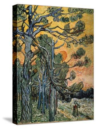 Pine Trees at Sunset, 1889-Vincent van Gogh-Stretched Canvas Print