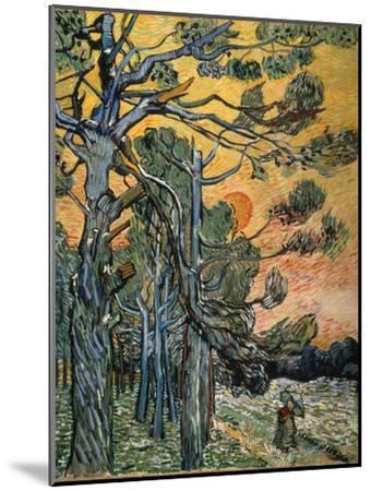 Pine Trees at Sunset, 1889-Vincent van Gogh-Mounted Premium Giclee Print