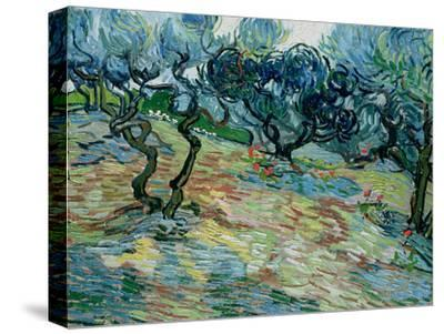 Olive Trees, 1889-Vincent van Gogh-Stretched Canvas Print