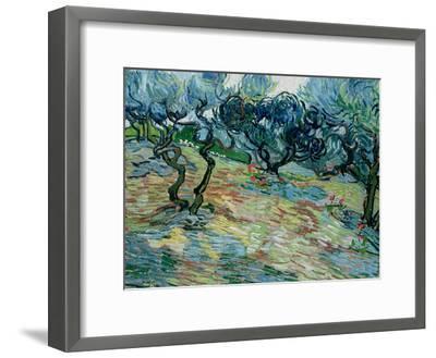 Olive Trees, 1889-Vincent van Gogh-Framed Giclee Print