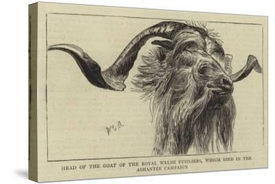 Head of the Goat of the Royal Welsh Fusiliers, Which Died in the Ashantee Campaign-William Edward Atkins-Stretched Canvas Print