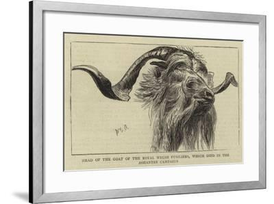 Head of the Goat of the Royal Welsh Fusiliers, Which Died in the Ashantee Campaign-William Edward Atkins-Framed Giclee Print