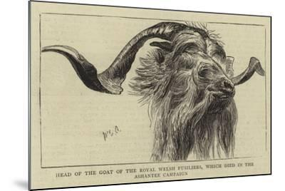 Head of the Goat of the Royal Welsh Fusiliers, Which Died in the Ashantee Campaign-William Edward Atkins-Mounted Giclee Print