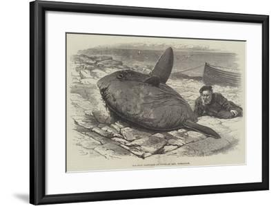 Sun-Fish Captured at Catalan Bay, Gibraltar-William Henry Pike-Framed Giclee Print