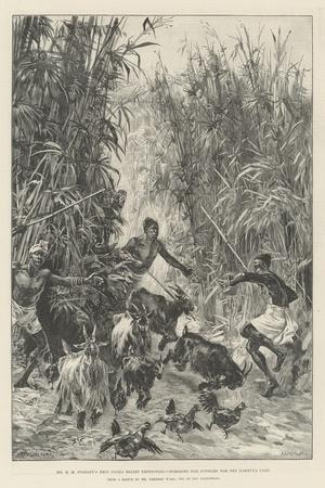 Mr H M Stanley's Emin Pasha Relief Expedition, Foraging for Supplies for the Yambuya Camp-William Heysham Overend-Framed Giclee Print