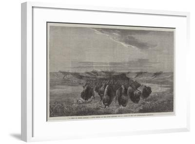 A Herd of Bisons Crossing a River Bottom on the Upper Missouri-William Jacob Hays-Framed Giclee Print