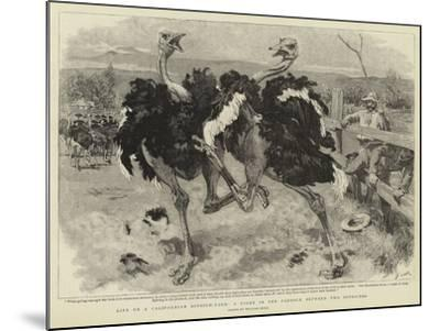 Life on a Californian Ostrich-Farm, a Fight in the Paddock Between Two Ostriches-William Small-Mounted Giclee Print