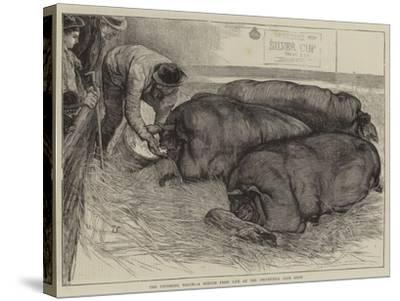 A Finishing Touch, a Sketch from Life at the Smithfield Club Show-William Small-Stretched Canvas Print