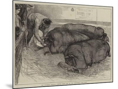 A Finishing Touch, a Sketch from Life at the Smithfield Club Show-William Small-Mounted Giclee Print