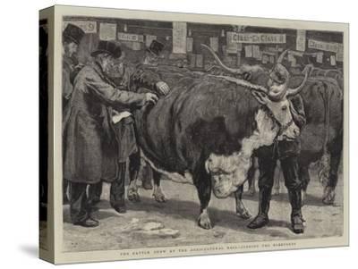 The Cattle Show at the Agricultural Hall, Judging the Herefords-William Small-Stretched Canvas Print