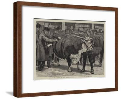 The Cattle Show at the Agricultural Hall, Judging the Herefords-William Small-Framed Giclee Print
