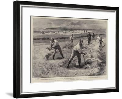 A Coveted Privilege, Convict Gangs Haymaking-William Small-Framed Giclee Print
