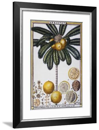 Aerostat (Theophrasta Aculeata)--Framed Giclee Print