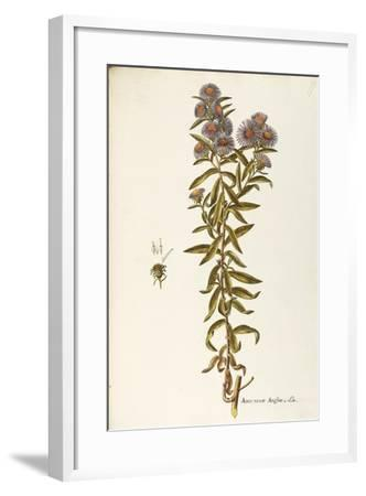 Asteraceae or Compositae--Framed Giclee Print