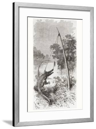 An Alligator Trap on the Oyapock or Oiapoque River--Framed Giclee Print