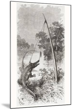 An Alligator Trap on the Oyapock or Oiapoque River--Mounted Giclee Print