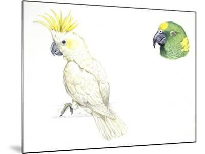 Birds: Psittaciformes--Mounted Giclee Print