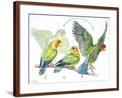 Birds: Psittaciformes--Framed Giclee Print