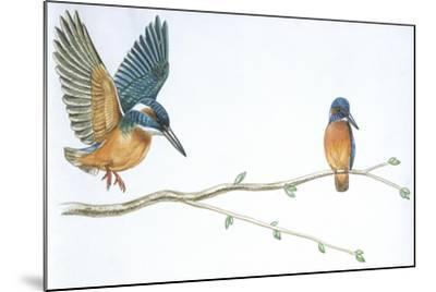 Birds: Coraciiformes--Mounted Giclee Print