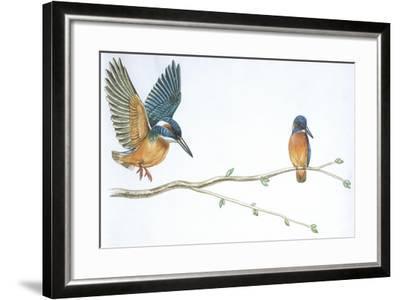 Birds: Coraciiformes--Framed Giclee Print