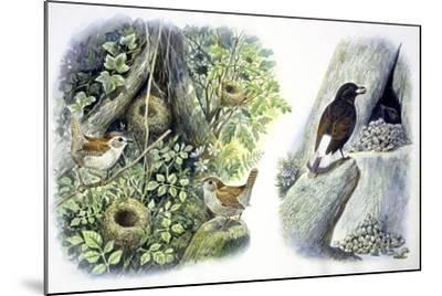 Birds: Passeriformes--Mounted Giclee Print
