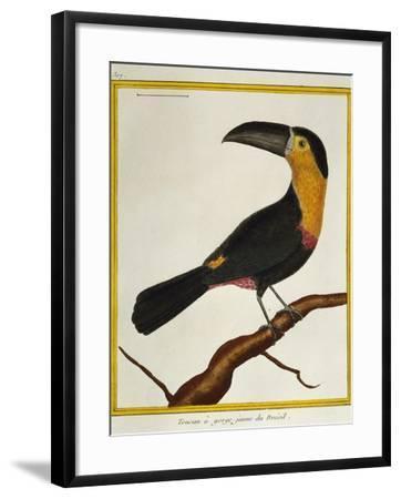 Channel-Billed Toucan (Ramphastos Vitellinus)--Framed Giclee Print