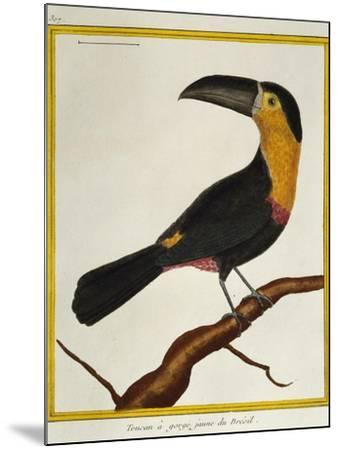 Channel-Billed Toucan (Ramphastos Vitellinus)--Mounted Giclee Print