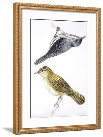 Birds: Passeriformes--Framed Giclee Print