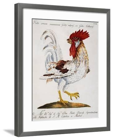 Common Rooster (Gallus Vulgaris--Framed Giclee Print