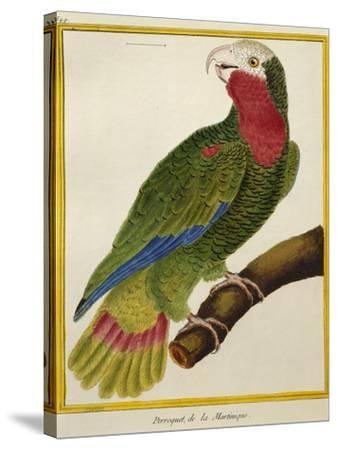 Cuban Parrot (Amazona Leucocephala)--Stretched Canvas Print