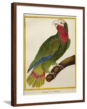 Cuban Parrot (Amazona Leucocephala)--Framed Giclee Print