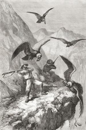 Édouard François André and Companion Being Attacked by Condors Near Calacali--Premium Giclee Print