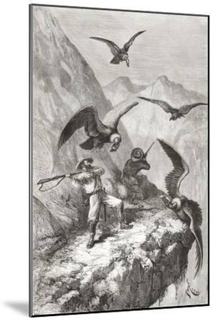 Édouard François André and Companion Being Attacked by Condors Near Calacali--Mounted Giclee Print