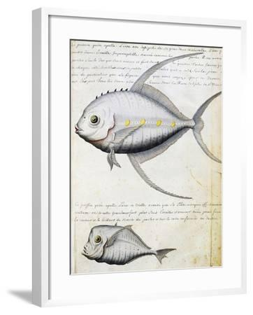 Fish Called Lisse and Moon Fish--Framed Giclee Print
