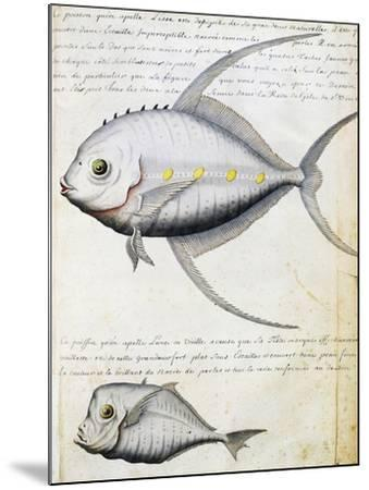 Fish Called Lisse and Moon Fish--Mounted Giclee Print