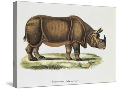 Indian Rhinoceroses (Rhinoceros Indicus)--Stretched Canvas Print