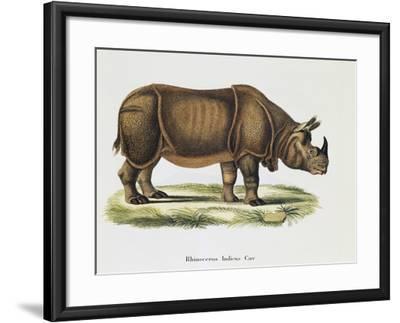 Indian Rhinoceroses (Rhinoceros Indicus)--Framed Giclee Print