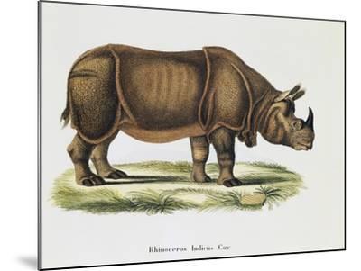 Indian Rhinoceroses (Rhinoceros Indicus)--Mounted Giclee Print