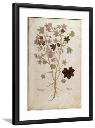 Mallow (Malva Sylvestris Elatior) by Leonhart Fuchs from De Historia Stirpium Commentarii Insignes--Framed Giclee Print