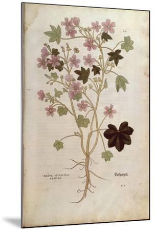 Mallow (Malva Sylvestris Elatior) by Leonhart Fuchs from De Historia Stirpium Commentarii Insignes--Mounted Giclee Print