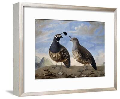 Pair of Californian Partridges--Framed Giclee Print