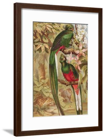 Quetzal--Framed Giclee Print
