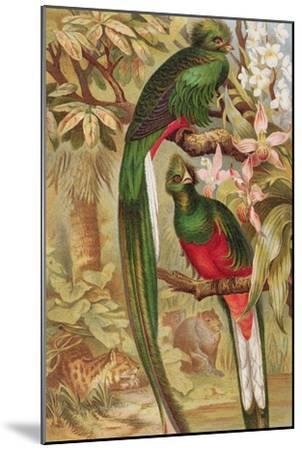 Quetzal--Mounted Giclee Print