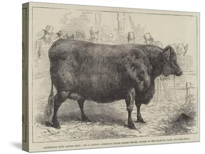 Smithfield Club Cattle Show--Stretched Canvas Print